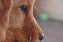 Doggies...:-)