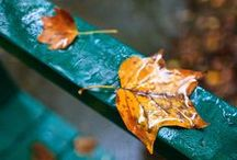 AUTUMN   / walk into autumn