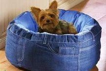 Dog e Cat -  roupas, acessórios, dicas, receitas e curiosidades