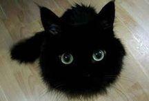 Foto e grafica gatti