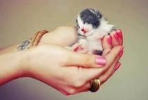 Kitty | Katz