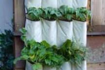 hergebruik / upcycling in de tuin / Hoe je door hergebruik en upcycling nog meer van je tuin kan maken.