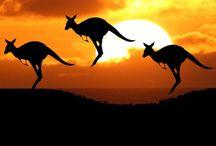 ⒹAustraila✧Oceania / Australia is a natural wonderland of beautiful beaches Oceanic; Oceanian  Fiji,  Kiribati,  Marshall Islands,  Federated States of Micronesia,  Nauru,  New Zealand,  Palau,   Papua ,New Guinea, Samoa,  Solomon Islands,  Tonga, Tuvalu,  Vanuatu