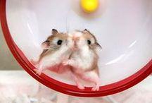 Hamsters.