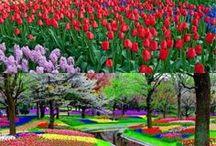Gardens / #Gardening ideas