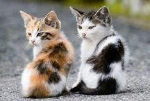 Kitten Kuteness