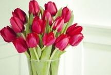 tulips...tulips...tulips... / by Veronica Encinias