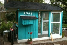 Coops Deluxe / I love my memories of my maternal grandmother's chickens.