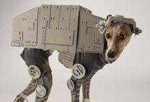 Cutest Pet Costumes!