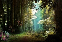 An Enchanted Forest
