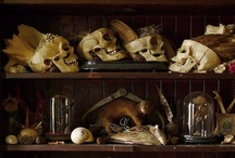 Love - Cabinets of curiosities
