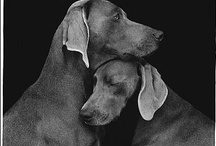 Handsome dogs...