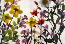 ▼▲Art Flowers Lover▲▼ /   / by ▲N▲
