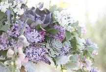 Lavender & Light