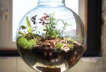 Tiny Natur