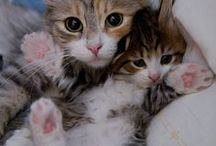 Death by cuteness