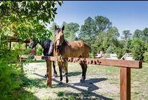 Kratka trawnikowa geoSYSTEM w stadninie koni