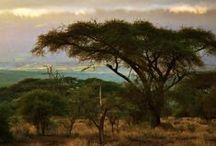 ~ Africa ~ / to visit - safari