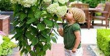plants, bonsai, flowers, vegetables, fruits