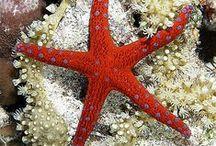 deniz ve ben önceki hayatım / Deniz ayrı bir dünya