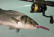 Revista de Pesca Spinning / Revista de pesca Spinning