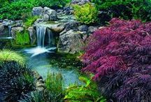 Water Gardens / Beautiful water garden ideas