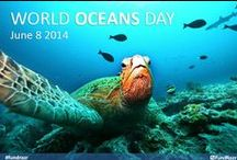 World Oceans Day 2014 / Celebrating the mysteries and secrets of the Worlds Oceans... What lies beneath the beautiful waters. #WorldOceansDay