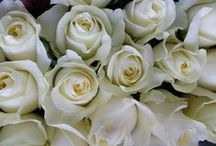 ROSES / Our roses are perfect for weddings, special events, or any occasion!