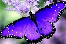 Beautiful Butterflies / Such delicate beauty in nature butterflies possess.  One of my favourite creatures.