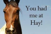 Country Humour / Funnies