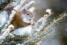 Winter Wonderland / The beauty of snow and crisp winter days