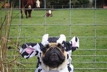 Dogs in Cute Costumes / A collection of sweet furbabys in cute costumes #dogsincostume #farm
