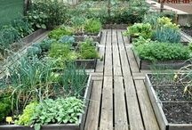 Allotment Life / Everything for the allotment, handy hints & tips, how to's, helpful advice, pictures, & great ideas