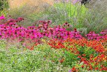 Vegetaciones / Flores, verdes, recursos representación