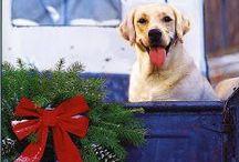 Jingle Paws / A doggy Christmas! #dog #Christmas #pets #