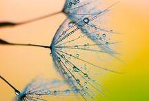 Rain & Dew Drops