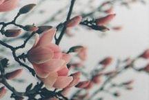 Λουλούδια****