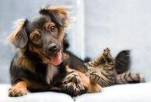 Blog sobre cães e gatos / Dicas e artigos que vão ajudar você a melhorar a relação com o amigão de quatro patas. Desde o xixi e cocô fora do lugar até como trazer um gatinho para dentro de casa - onde já vivem outros bichos.
