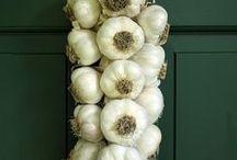 McFadden Farm Garlic