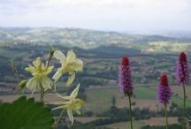 Umbria - maggio 2013 / Viaggio alla scoperta di Todi, Orvieto, Gubbio e Assisi. Grazie a tutti i partecipanti!