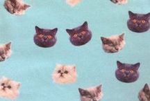 Cats! / Cats. Oh yeah! / by Meow