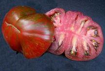 Tomatoes Galore! / by bodisur gun