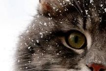 Meow! / The world of cats!