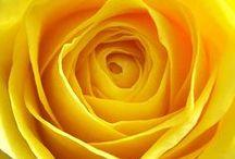 Yellow / Yellow