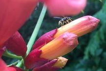 Nature #vegetation #Natural #inspirational / Images et vidéos de la nature