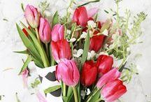 por onde flor / Rosas, tulipas e girassóis! Aqui você vai ver muitas flores.