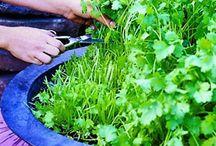 Garden / Better Naturally / Organic.Fresh./Beauty.  / by M M