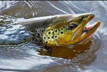 Let's have your all time favourite fly fishing pictures... / Fly fishing