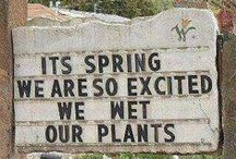 Plant Humor / Silly and funny things people are doing with plants and gardens, hopefully some of these will brighten your day!