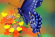 Beautiful Butterflies / We have a fabulous selection of Butterfly products, here is some inspiration!